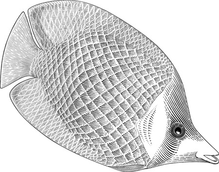 Black and white vector image of butterflyfish engraving style Ilustração