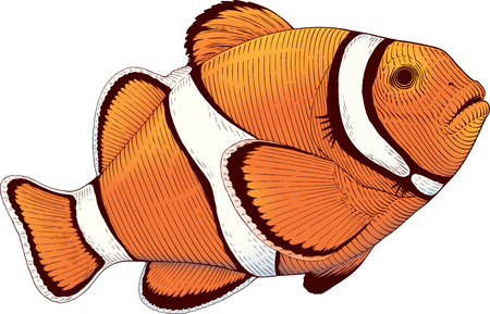 Color vector illustration of coral fish Banco de Imagens - 95248888