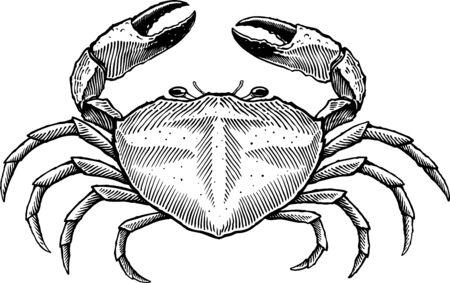 Zwart-wit vectorillustratie van grote krab gravure style