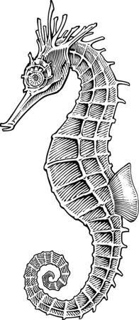 Black and white vector image of sea horse engraving style Illusztráció