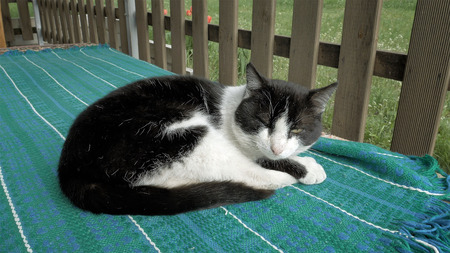 house pet: Cat sleeping on a bench in patio outdoors outside the house. Pet animal behavior concept. Stock Photo