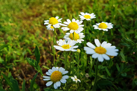 Wildflowers on the rural field lawn. Nature landscape background.