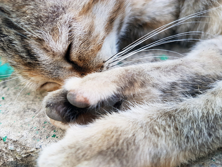 Cat muzzle sleeping close up
