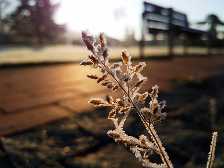 Hoar frost over the grass in winter morning