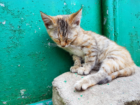 Cat sleeping outdoors close up Stock Photo