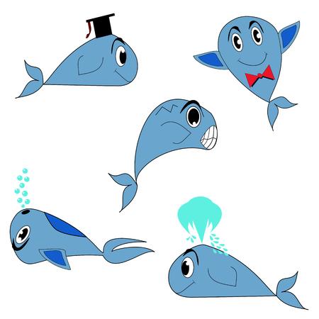baleine bleue: rorqual bleu