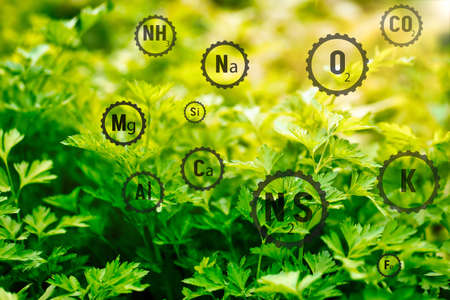 Trace elements on parsley leaves. Chemical elements in the composition of the soil for good maintenance of agricultural crops.