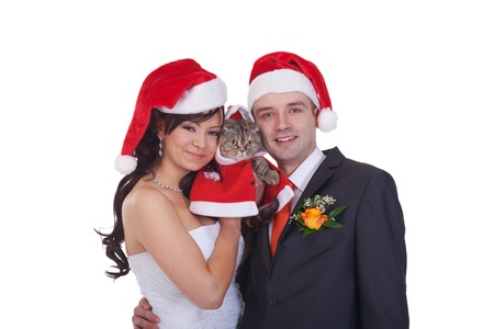 Newlyweds and scottish fold in red caps