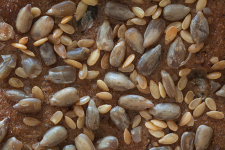 Macro from a top part of a bread with seeds