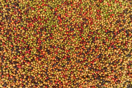 Big variaty of coffee beans: from green to rotten.