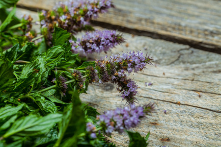 Fresh spearmint on the vintage wooden table Stock Photo