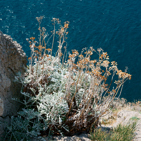 deposition: Bush grass on the slope of rocks