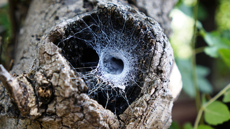 visone: visone dal web nella cavità