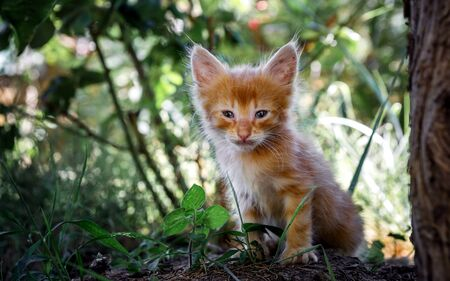 red kitten on the background of green grass just saw the light very small
