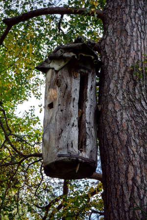 a beehive made of a log hangs
