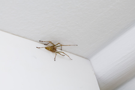 reproduce: spider on the ceiling