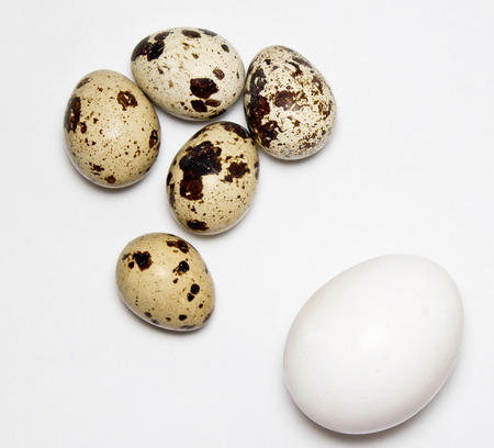 chicken and quail eggs on white background Imagens - 78237670