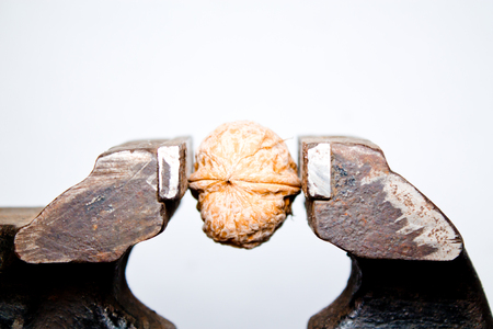 walnut in a vice closeup on white background Stock Photo