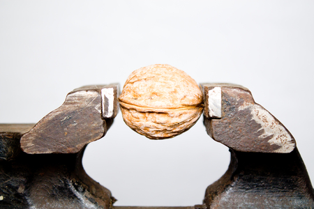 walnut in a vice closeup on white background