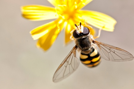 Bee on a flower. Close up photo