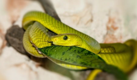 Green snake in a forest close-up photo