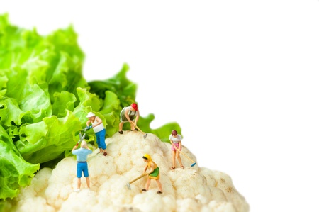 Miniature farmers standing on top of cauliflower