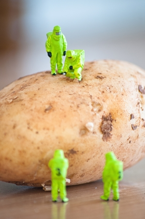 Group of Researchers in protective suit inspecting a potato  Transgenic food concept photo
