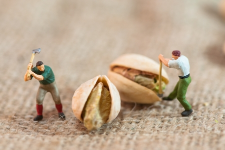 Miniature loggers cut up pistachios. Macro photography
