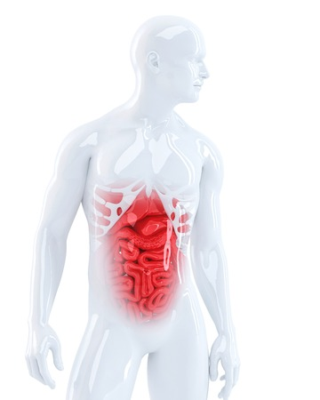 3d man displaying his internal organs. Medical illustration. Isolated. Contains clipping path Stock Illustration - 28219134
