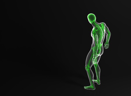 man rear view: Skeleton of the man. Rear view. Contains clipping path Stock Photo