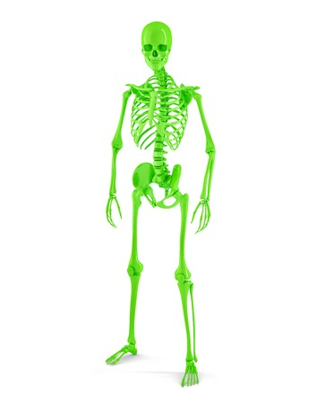 Male Human skeleton. Isolated. Contains clipping path photo
