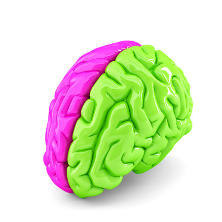 Creative brain concept. Isolated. Contains clipping path photo