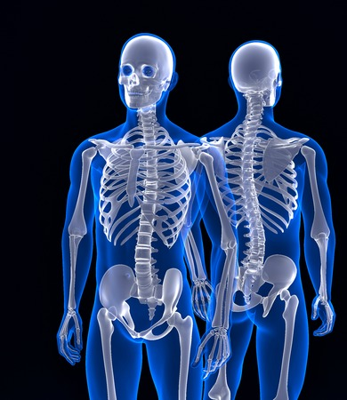osteoporosis: Human skeleton close up. Front and back view. Contains clipping path