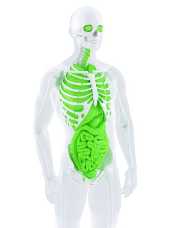 3d illustration of a male anatomy. Isolated. Contains clipping path illustration