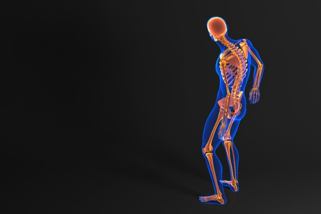 Human skeleton. Rear view. Contains clipping path photo