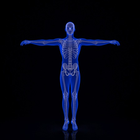 man full body: Human skeleton. 3d illustration. Contains clipping path Stock Photo