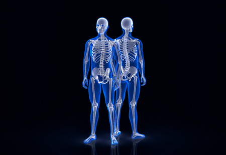 Human skeleton. Front and back view. Contains clipping path photo