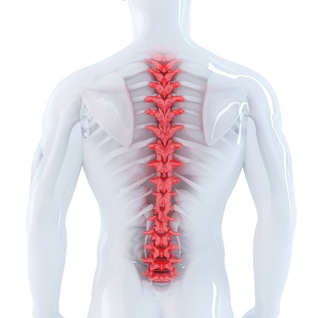3d illustration of human spine. Isolated. Contains clipping path illustration