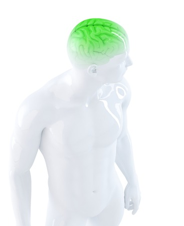 Human brain. Anatomical illustration. Isolated. Contains clipping path illustration