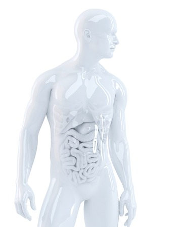 Human body with internal organs. 3d illustration. Isolated. Contains clipping path