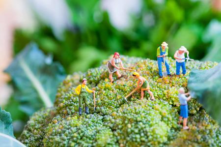 Gruppe von Bauern auf einem riesigen Blumenkohl. Standard-Bild - 29608274