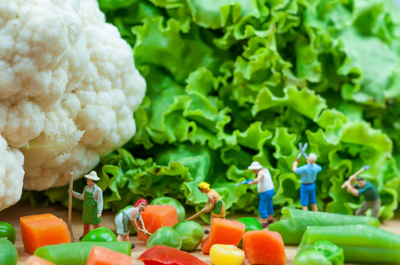 Group of farmers harvesting a vegetables  Macro photo