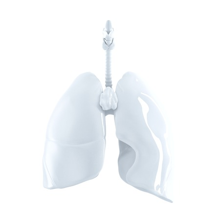 gullet: Human Lungs. 3d render. Isolated over white, contains clipping path.