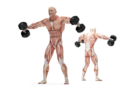 raises: Lateral raises shoulders exercise. Anatomical illustration. Isolated over white. Contains clipping path Stock Photo
