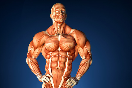 fascia: Bodybuilder anatomy. 3D illustration. Contains clipping path Stock Photo