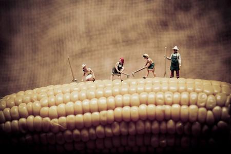 miniature: Happy farmers harvesting corn. Macro photo. Stock Photo