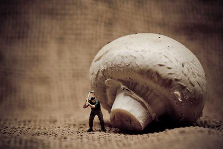 lumberman: Miniature lumberjack cutting mushroom with axe. Macro photo