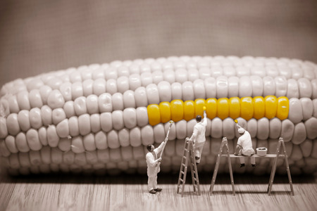 Miniature painters coloring corncob. Macro photo.