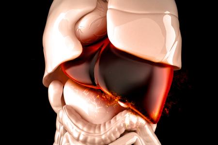 hepatic: Burning human liver closeup. Liver disease concept. 3D illustration.