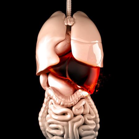 hepatic: Burning human liver. Liver disease concept. 3D illustration.